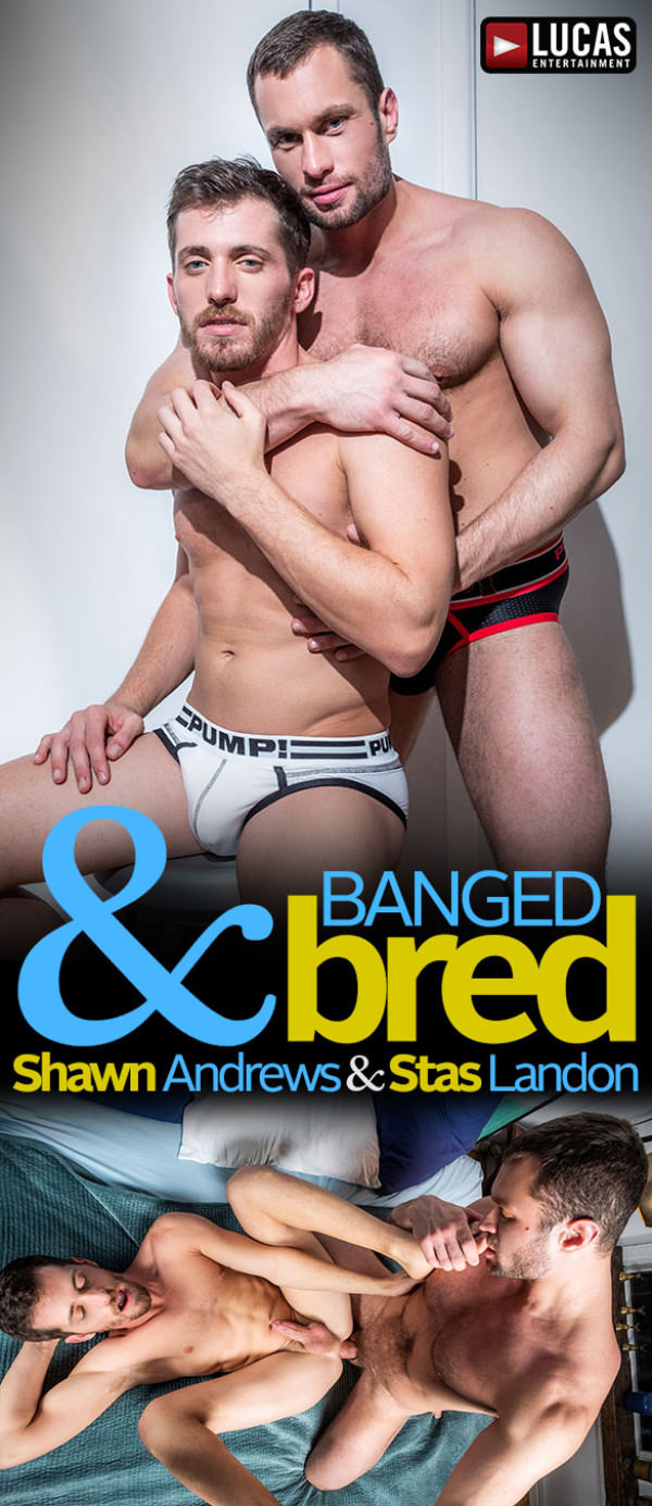 LucasEntertainment Banged & Bred Stas Landon barebacks Shawn Andrews