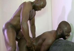 BlackBreeders – Black Friday – Champ Robinson & Jai Sean – Bareback