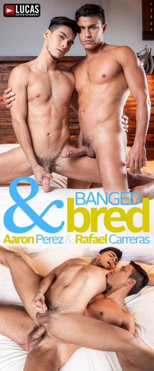 LucasEntertainment – Banged & Bred – Aaron Perez rides Rafael Carreras' 10-inch cock bareback